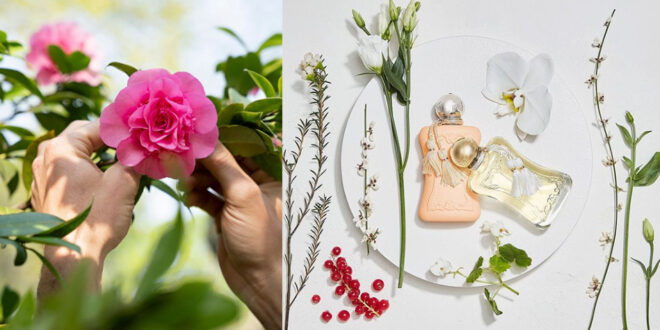 The art of synesthesia when choosing a fragrance.